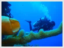 Drop offs in Cozumel dives